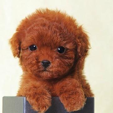 幼犬出售默认文章标题内容信息
